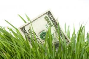 cash-grass